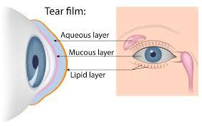 Illustrated diagram of tear film